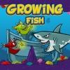 Growing Fish